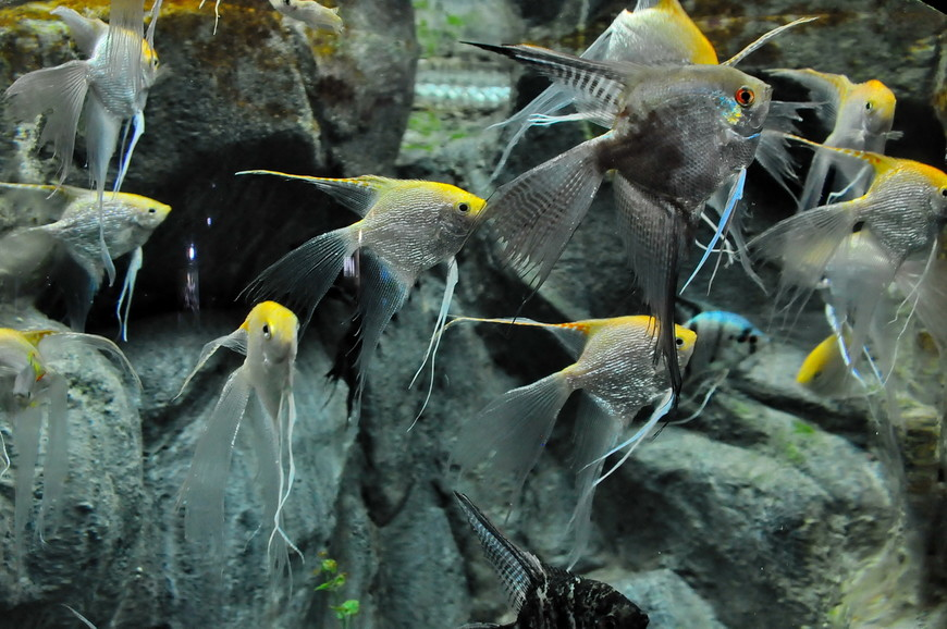 23. Очень красивые рыбки. Всего в океанариуме на территории 6000 кв.м. располагается 30 аквариумов.