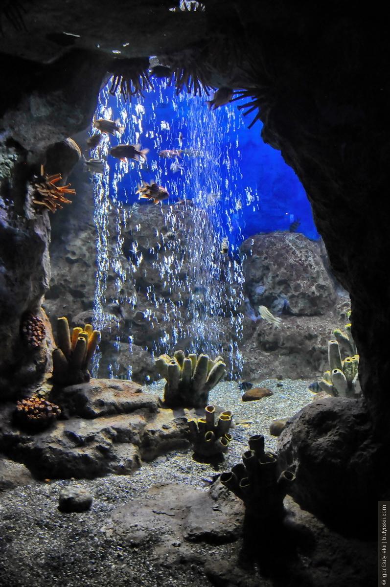 Адлер — Океанариум Sochi Discovery World