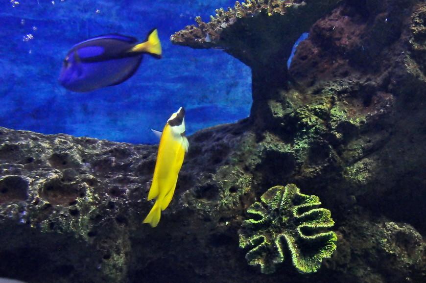 27. Там же устроен и гигантский аквариум с кораллами и акулами.