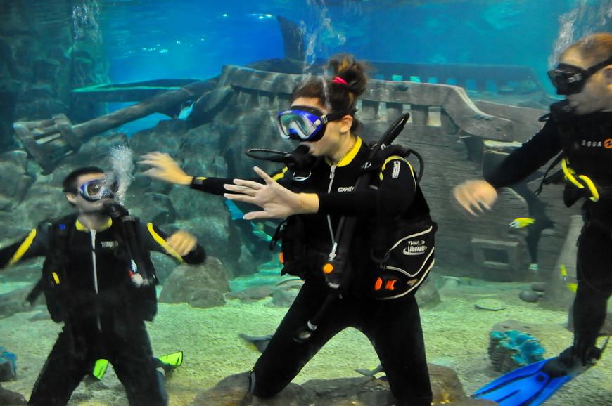 30. За дополнительную плату вы можете зайти в аквариум в сопровождении сотрудников и поплавать с акулами. По факту все выглядит как представление для посетителей, а вы еще и платите за это.
