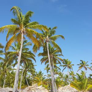 Доминикана,пляжный отдых.