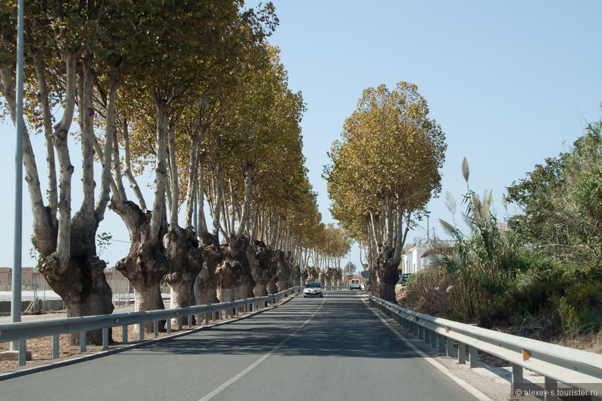 Часто в населенных пунктах дороги обсажены деревьями - получается красивая аллея. Видно, что эти деревья уже обрезались, и не один раз.