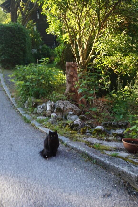 Жил да был черный кот в Обертрауне
