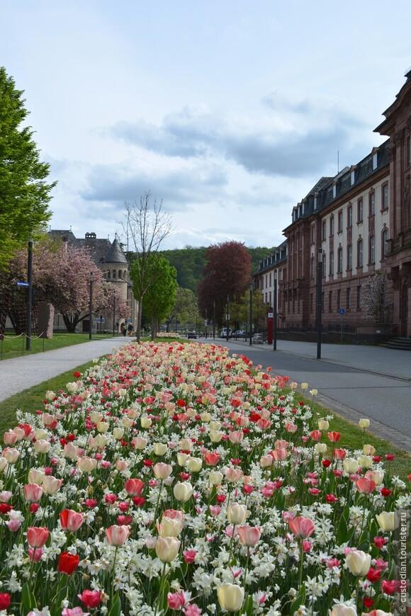 Конец апреля - весь город утопает в цветущих тюльпанах! Красота необыкновенная!