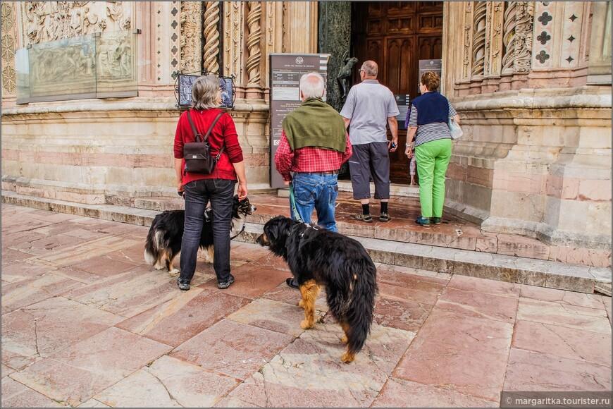 собаки тоже хотели в собор