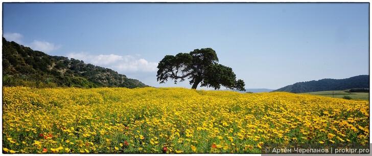 Что делать на Кипре зимой. 7 лучших мест и интересных занятий