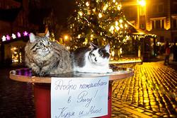 Коты приглашают российских туристов в Ригу