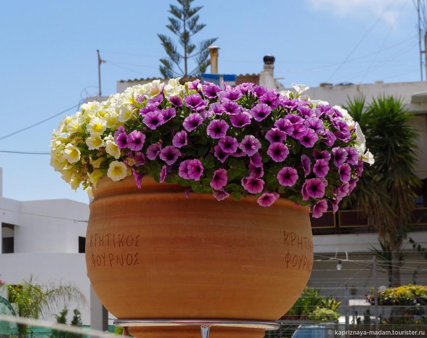 В Греции много цветов! И красивых!!