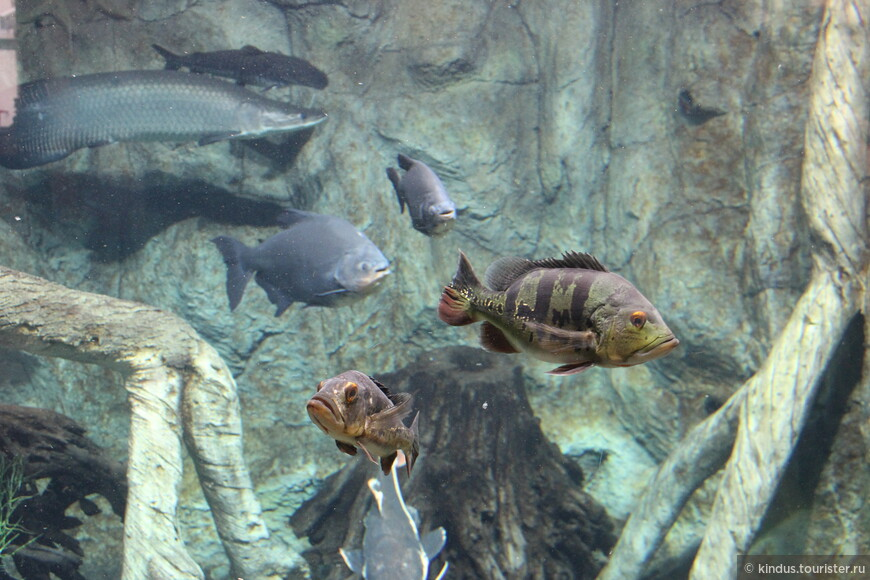 В аквариумах много разных рыб
