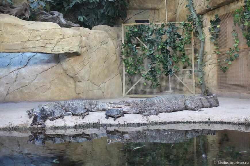 Крокодилы и черепахи живут мирно