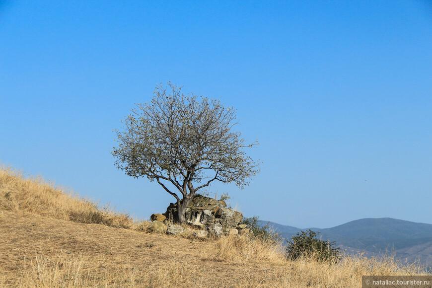 Ты хочешь знать, что видел я      на воле? - Пышные поля,      холмы, покрытые венцом      дерев, разросшихся кругом,      шумящих свежею толпой,      как братья в пляске круговой.