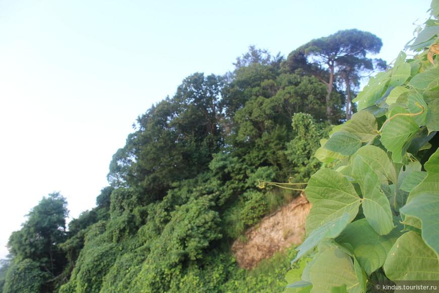 Горы, на которых расположен ботанический сад, покрыты густой растительностью.