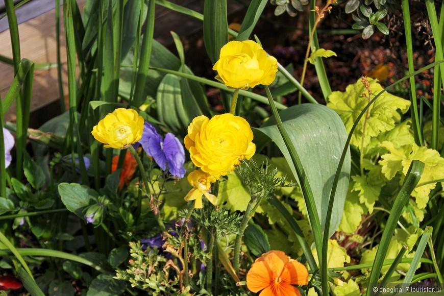 Природа Канады очень похожа на нашу. И цветы растут те же самые, вот только цвет у них будет поярче, покрасочнее.