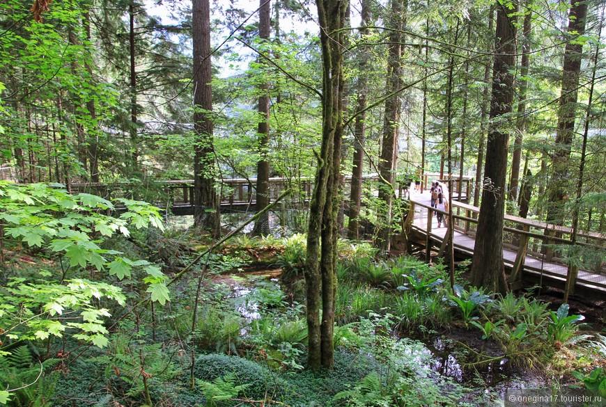 Для туристов в парке проложены деревянные мостки - и идти удобно, и заплутать невозможно, и природа не страдает.