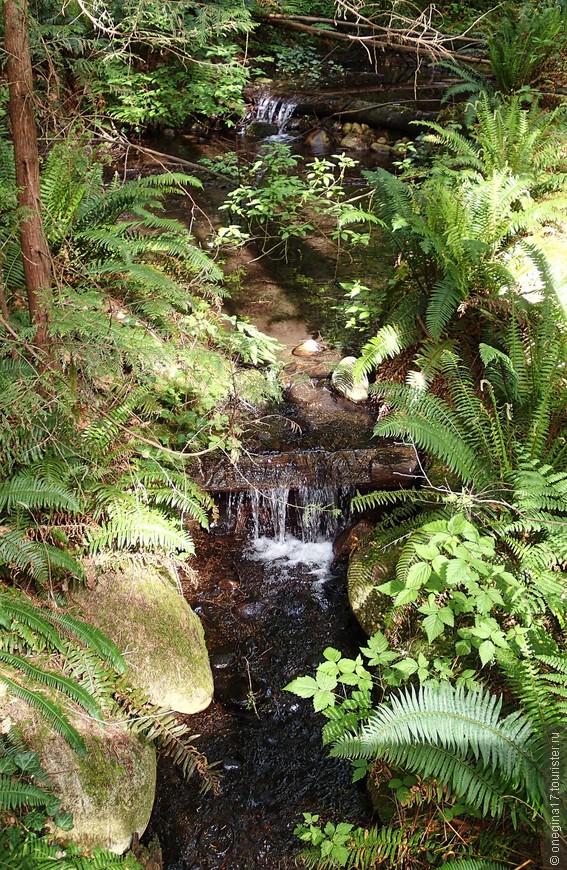 Ручей иногда становился громким и стремительным, чтобы сразу же исчезнуть под древней корягой.