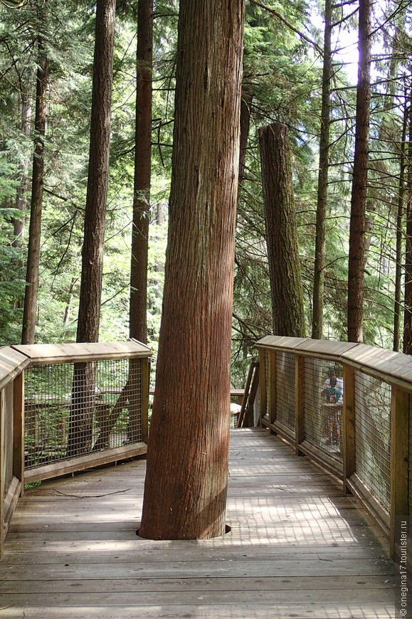 Яркий пример того, как нужно беречь и любить природу. В парке таких примеров очень много.