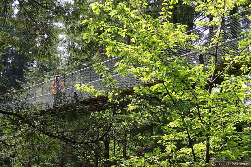 Уйдя от моста Капилано достаточно далеко, неожиданно для себя, мы увидели его мелькнувшим среди деревьев.
