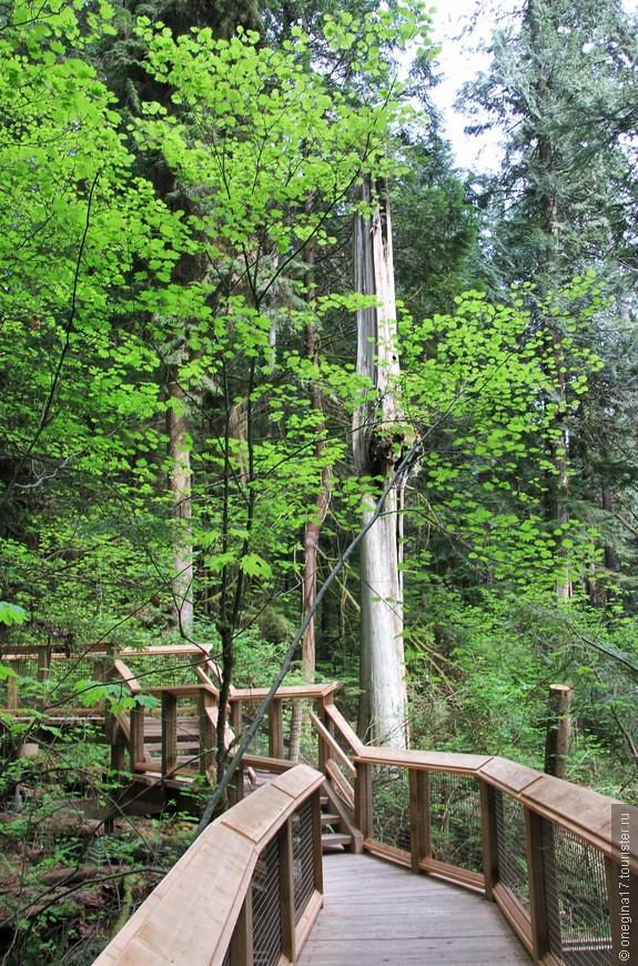 Поскольку старые деревья никто не уничтожает и дает жизни идти естественным путем, парк производит впечатление совершенно дикого и дремучего.