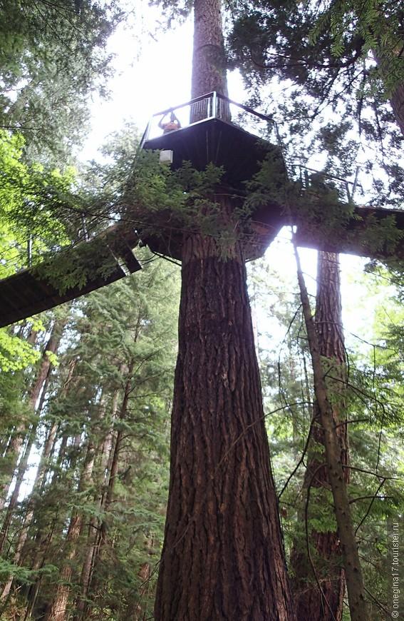 Аттракция Tree Tops. Когда еще можно будет побегать от дерева к дереву!