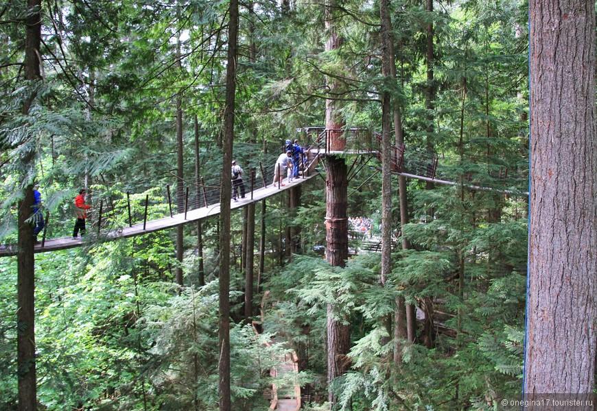 Удовольствие от прогулок над деревьями оказалось выше, чем прогулка по мосту Капилано.