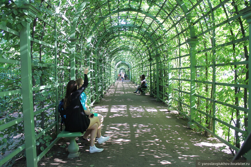Аллеи-туннели Летнего сада. По ним приятно прогуливаться, любуясь сверкающим через густую листву солнцем.