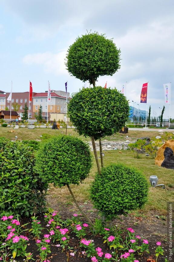 04. В парке очень много зелени, кустики и деревца красиво подстрижены.