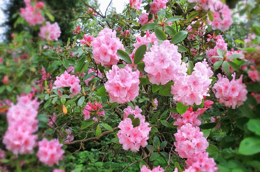 В мае парк утопал в цветах. Цвело все: клумбы, полянки, деревья. И запах кружил голову...