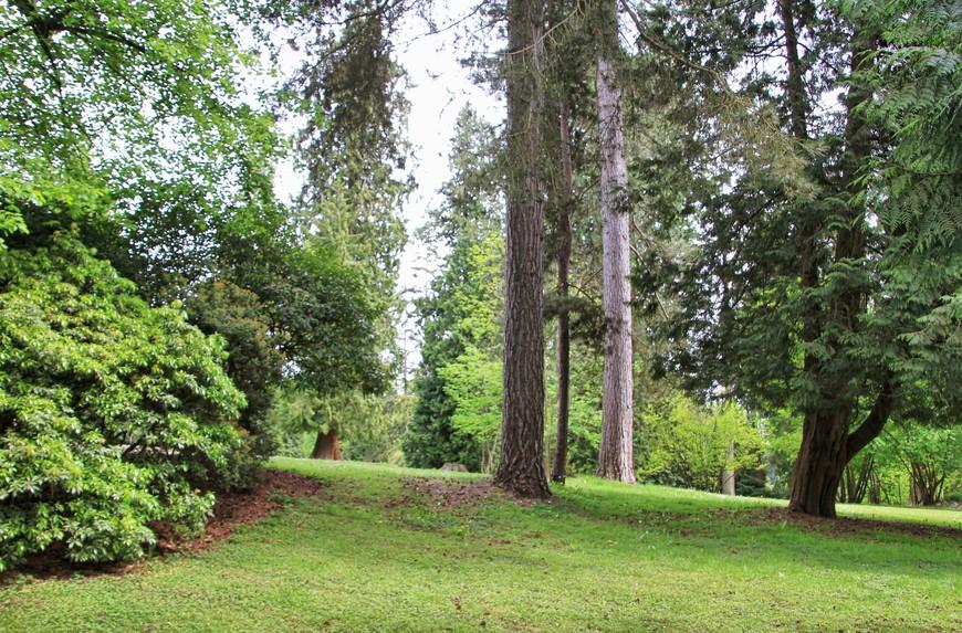 Величественностью секвой я восторгалась ровно до того момента, пока не увидела канадских кедров-великанов...