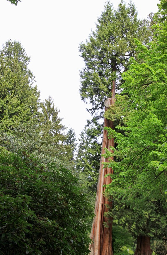Старое дерево прислонилось к новой поросли. Никому не мешает, никто его на дрова не распилил...