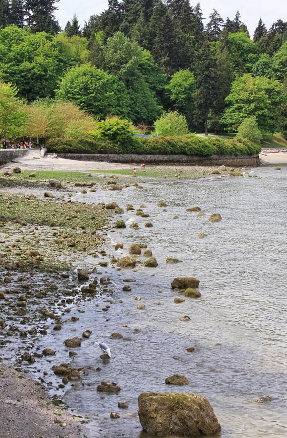 Вдоль такого берега и идет дорожка. Слева природа. Справа, на берегу, чайки, утки, гуси, еноты. Каждый найдет свое!