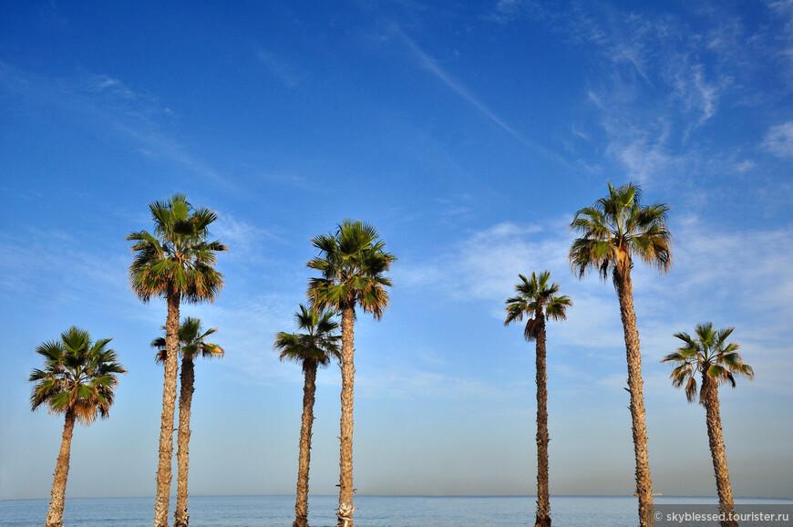 Пальмы в Лас Пальмас