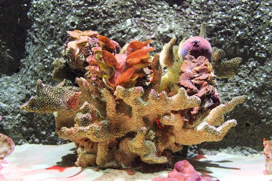 Океонариум на Винперле.