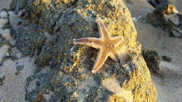 На закате, морская звезда после отлива