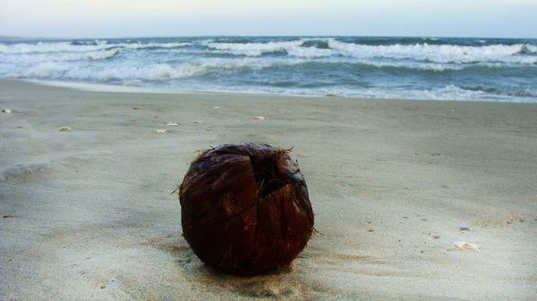 Просто кокос