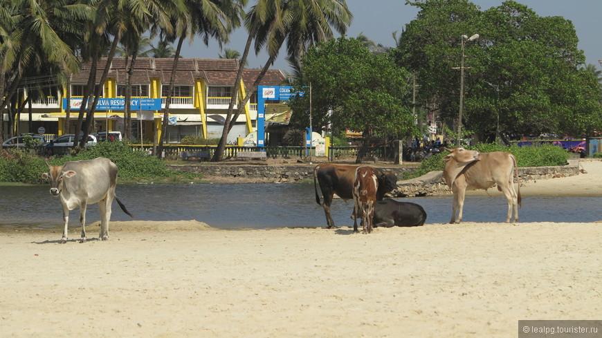 А вот такая картина на пляжах южного ГОА, что уж творится на сереве....