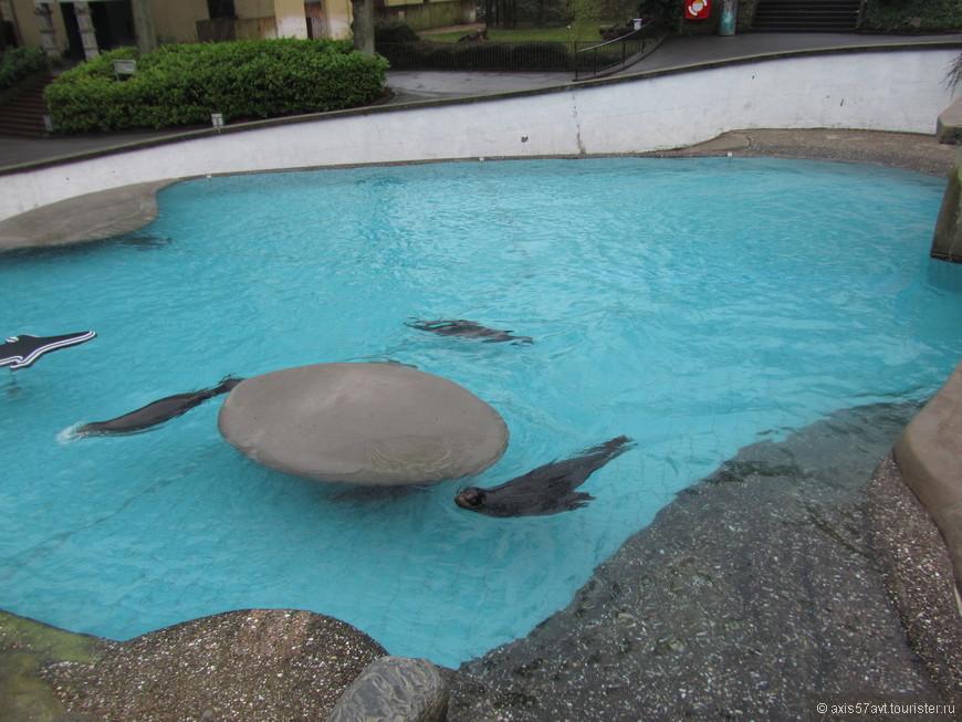 тюлени не желали по-многу из воды выскакивать, просто плавали