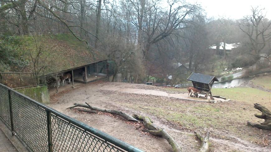 Весь зоопарк на холмах. Многие животные попрятались, то-ли из-за дождя, то-ли от не сезон для них.