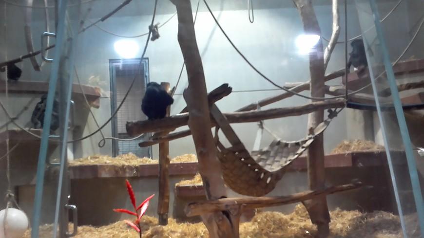 в обезьяннике только в одном вольере и были шимпанзе