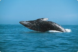 В Японии пассажирский паром столкнулся с китом