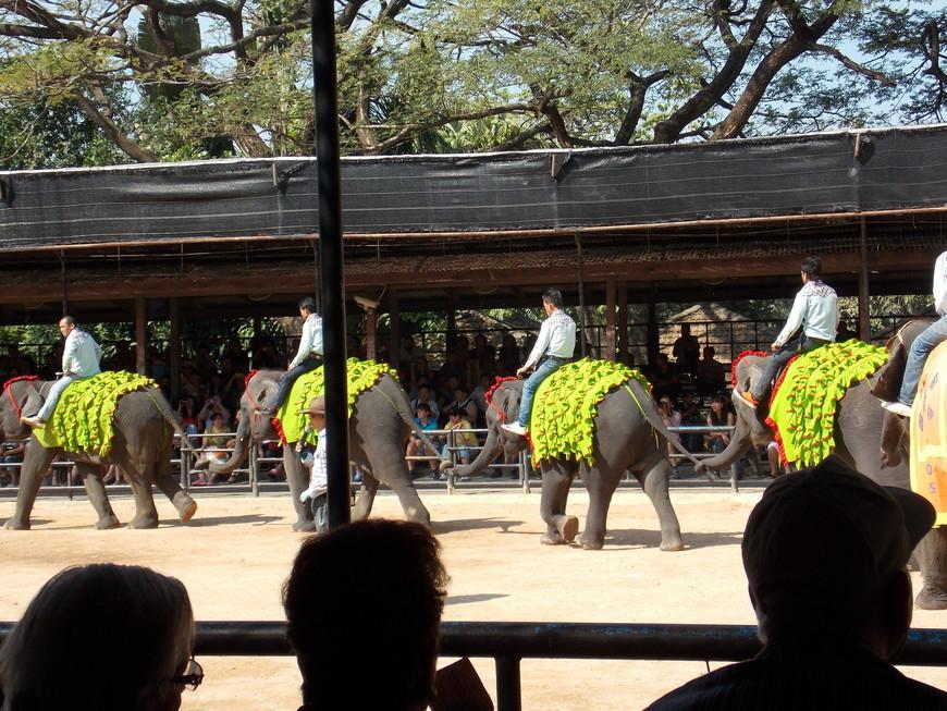 Тропический сад Нонг Нуч, шоу слонов
