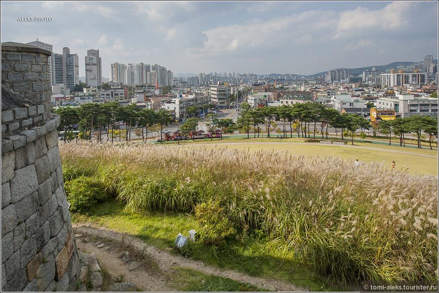 Травка отменная. На дворе - октябрь-месяц. Разве скажешь? Но не будим судить по соснам - они вечнозеленые. Клены к концу октября в Южной Корее уже ярко-оранжевые. И мы это увидим в национальном парке Сораксан на самом севере страны.