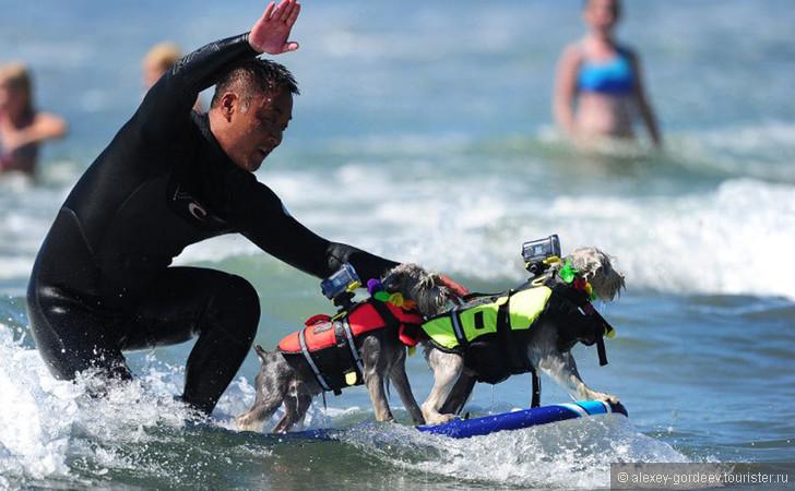 Города и пляжи Калифорнии для любителей серфинга