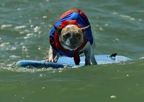 Собачий серфинг, Хантингтон-Бич