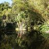 Сады парка Гнри Хантингтона