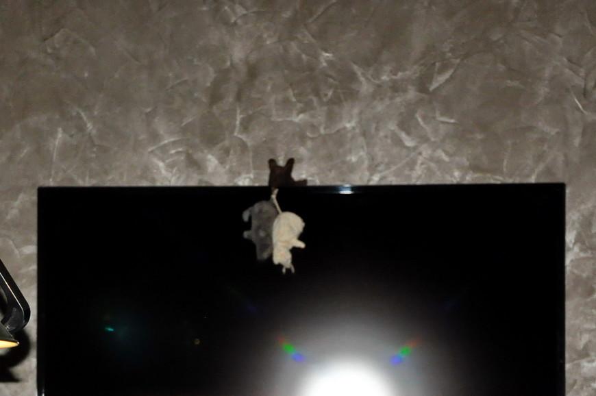 08. Мышь повесилась от одиночества в бильярдной, потому что все работают.