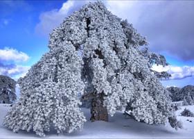 Ну что вы, снега не видели? :)