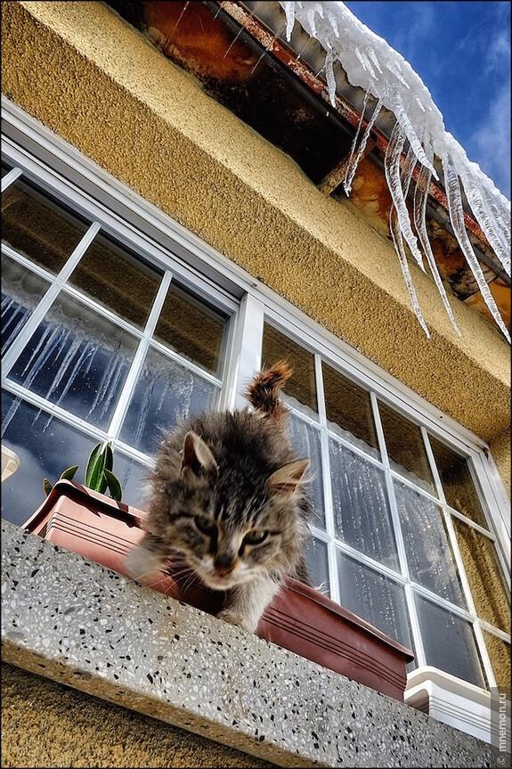 Кот с сосульками.