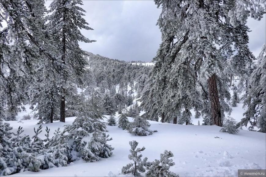 Заснеженный лес и склоны