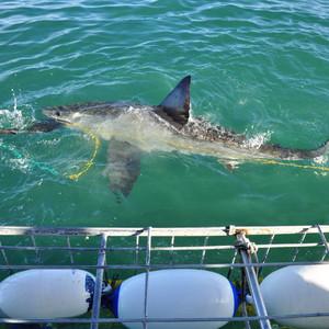 ЮАР.ч.2. В поисках белых акул