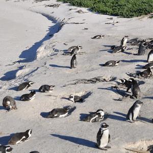 ЮАР.ч.4.Пингвины и котики